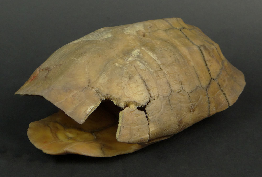 128 - Rare Chinese Inscribed Tortoise Shell